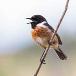 8665-Workshop identificação de aves img news Prancheta 1