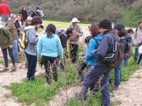 Primeiro Percurso Pedestre de 2017   À Descoberta de Plantas Silvestres Comestíveis